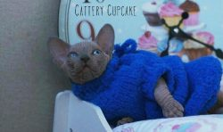 Vitor Cupcake